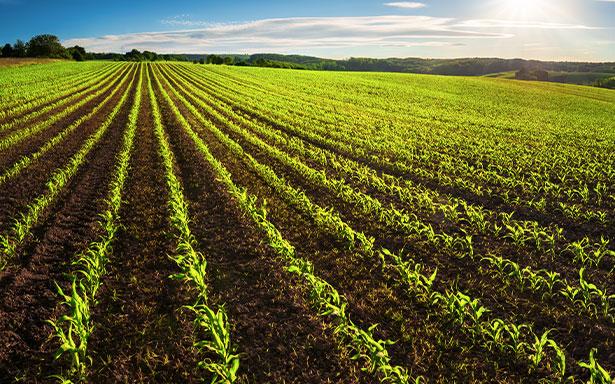 servizi-agricoltura.jpg